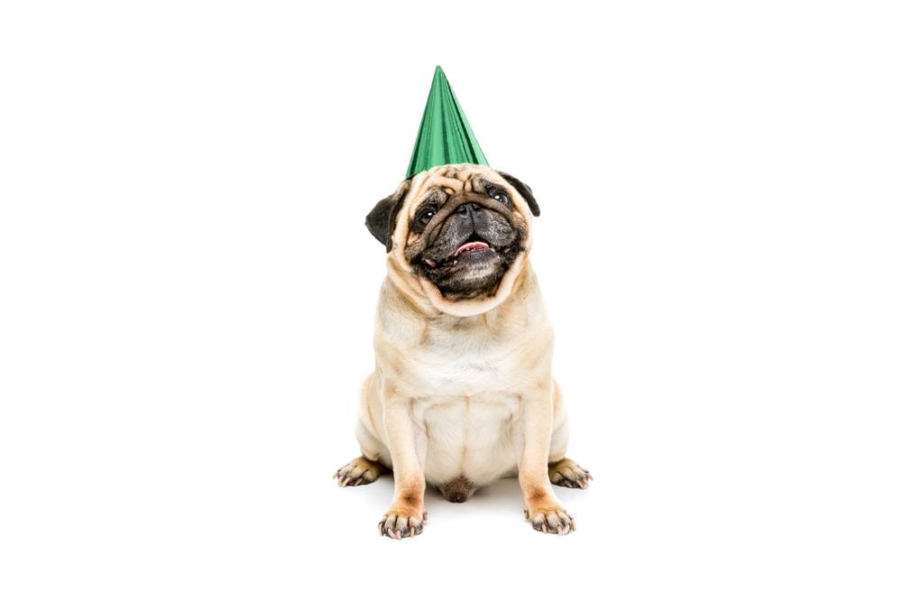 Birthday Animal Party